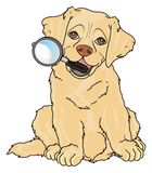 Puppy with a magnifier. Cute puppy of labrador sit and hold a large magnifier Stock Photography