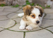 Cute puppy laying on pavement Stock Image