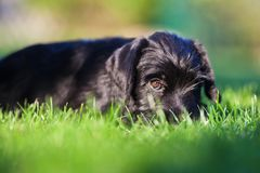 Cute puppy looking in camera Stock Photos