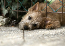 Cute puppy looking Stock Images