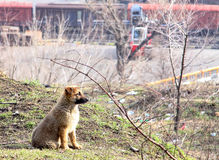 Cute puppy lost in the city. The dog on the background of the sea port. Beautiful and fluffy pedigree dog. On the precipice of the abyss sits.one Royalty Free Stock Images