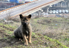 Cute puppy lost in the city. The dog on. A cute puppy lost in the city. The dog on the background of the sea port. Beautiful and fluffy pedigree dog. On the Royalty Free Stock Photo