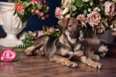 Cute puppy  lying on the floor with flowers Stock Photography