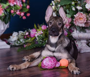 Cute puppy  lying on the floor with flowers Stock Photos