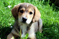 Cute puppy lying in grass stock photos