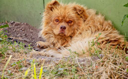 Cute puppy lying near the booth. Cute puppy lying on the street near the booth Royalty Free Stock Photos