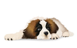 Cute puppy lying sad. Stock Images
