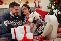 Cute puppy Meltzer as gift for Christmas Royalty Free Stock Images