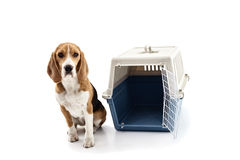 Cute puppy near a portable cage Stock Photography