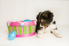 Cute Puppy next to Easter basket with plastic eggs Royalty Free Stock Images