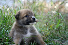 Cute puppy at the park Stock Photo