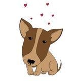 Cute puppy pitbull Stock Image
