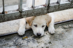 A cute puppy is playing, Face's through under the fence Stock Photos