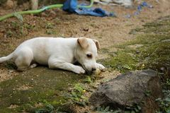 Cute puppy in playing mood royalty free stock image
