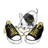 Cute puppy playing with sneakers. Vector illustration for a card or poster. Print on clothes. Royalty Free Stock Images