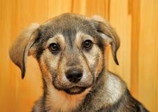 Cute puppy pooch Stock Photos