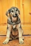 Cute puppy pooch Stock Image