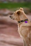 Cute puppy Royalty Free Stock Photos