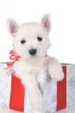 Cute puppy in present box Stock Photography