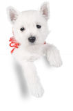 Cute puppy in present box Royalty Free Stock Photos