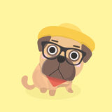 Cute puppy pug. Royalty Free Stock Images
