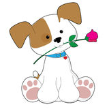 Cute Puppy with Rose Royalty Free Stock Photography