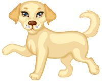 Cute puppy running Stock Images