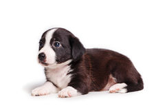 Cute puppy sad look Royalty Free Stock Image