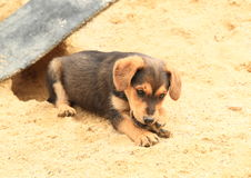 Cute puppy on sandpit Stock Photography