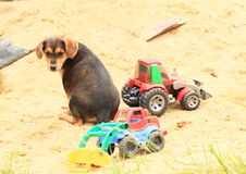 Cute puppy on sandpit Royalty Free Stock Photography