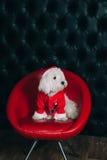 Cute puppy. In santa costume Stock Image