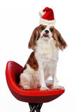 Cute puppy with santa hat Stock Image