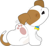 Cute Puppy Scratching Stock Images