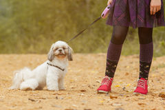Cute puppy sitting near of feet his little owner Stock Images