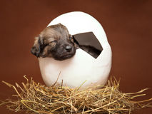 Cute puppy sleeping in the egg Stock Photography