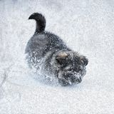 Cute puppy in the snow. Oil-paint stylization stock photo