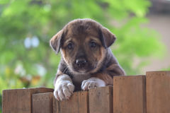 Cute puppy. Standing on fence Royalty Free Stock Photos