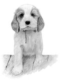 Cute Puppy stepping on a brick wall. royalty free illustration