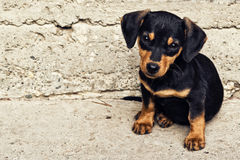 Cute puppy at street Stock Photo
