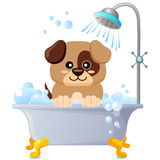 Cute puppy taking bath. Dog grooming vector illustration