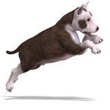 Cute puppy terrier Stock Photo