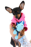 Cute puppy with toy in female hand Royalty Free Stock Images