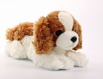 Cute puppy toy shot on white Royalty Free Stock Photos