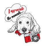 Cute puppy with a vintage camera. Pedigree dog. Labrador.  Royalty Free Stock Photography