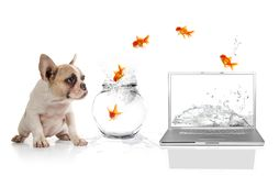 Cute Puppy Watching Goldfish Escaping the Virtual Royalty Free Stock Photo