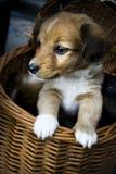 Cute puppy watching life around stock photo