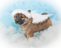 Angel Puppy Royalty Free Stock Images