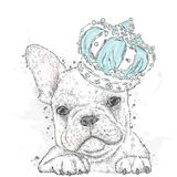 Cute puppy wearing a crown. French Bulldog. Royalty Free Stock Photos
