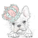 Cute puppy wearing a crown. French Bulldog. Stock Photos