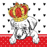 Cute puppy wearing a crown. Vector illustration for greeting card, poster, or print on clothes. Dog clothing. Stock Image